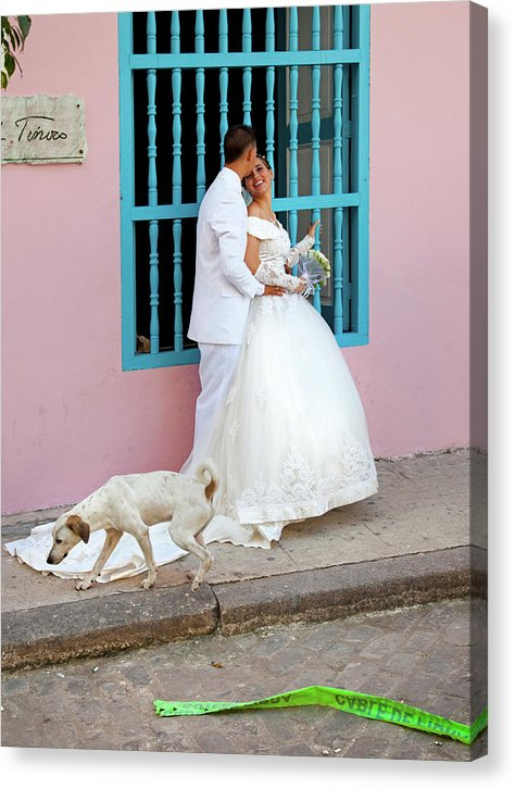 Wedding Couple With Dog Havana Cuba - Canvas Print