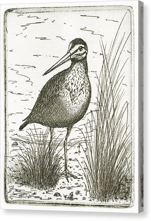 Yellowlegs Shorebird - Canvas Print