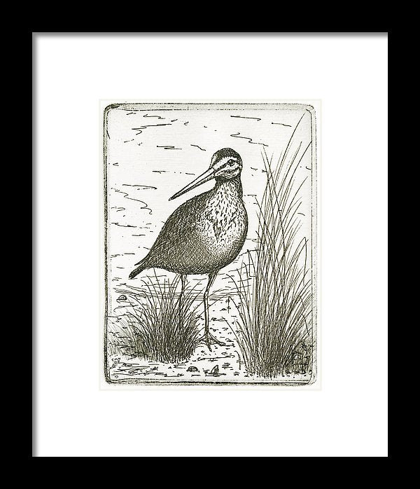 Yellowlegs Shorebird - Framed Print