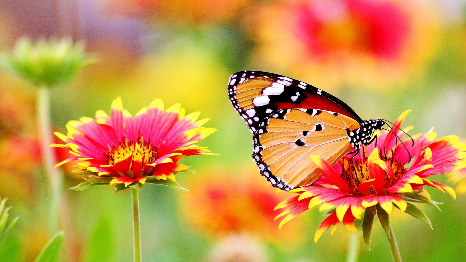 beautiful inspiring flowers and butterfly