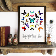 Load image into Gallery viewer, Lepidoptera Butterfly Art Print