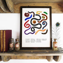 Load image into Gallery viewer, Myriapoda Millipede Art Print