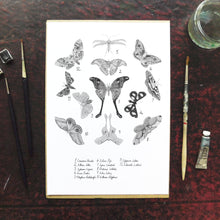 Load image into Gallery viewer, Archaeolepis Moth Art Print