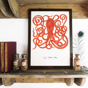Octopoda Octopus Art Print