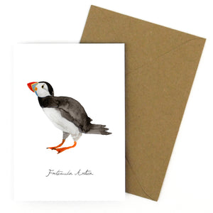 Improbability Common Puffin Greetings Card