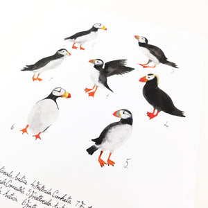 Improbability of Puffins Art Print