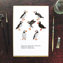 Load image into Gallery viewer, Improbability of Puffins Art Print