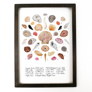 Mollusca Sea Shell Art Print