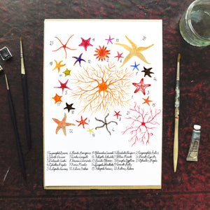 Asterozoa Starfish Art Print