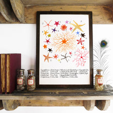 Load image into Gallery viewer, Asterozoa Starfish Art Print