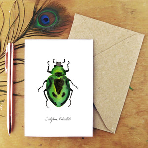 Beetle Specimens Greetings Card Pack