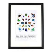 Load image into Gallery viewer, Coleoptera Beetle Art Print