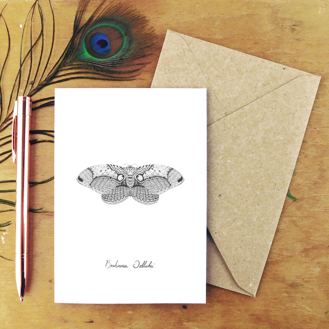 Archaeolepis Owl Moth Greetings Card