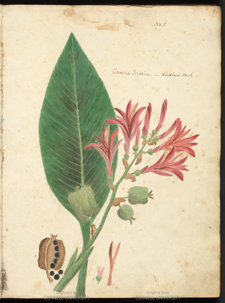 Wollstonecraft, A. Kingsbury. Specimens of the plants and fruits of the island of Cuba (3 volumes)