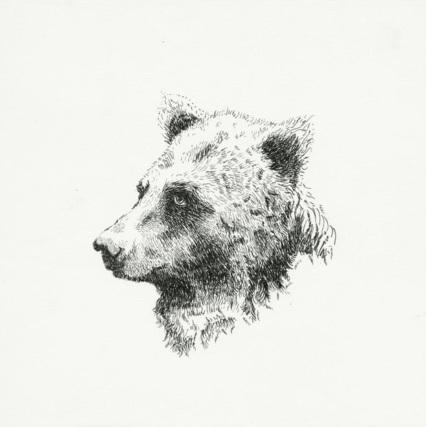 ACOUSTIC BEAR - Limited Edition, 150 ct 12x12