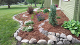 Ground cover shrubs in a bed mulched with straw and bordered in gret stones.