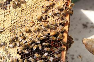 This Earth Day What Are You Going to do for the Honey Bees?