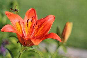 Honey Bees and Other Pollinators