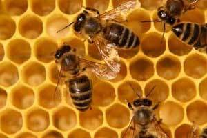 Why Honey Candles is supporting bee research