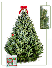 6 - 7 ft Fresh-Cut Premium-Grade Fraser Fir Christmas Tree