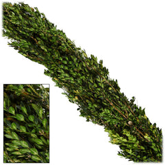 Boxwood - 25ft Christmas Garland
