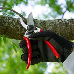 Bypass vs. Anvil Pruners