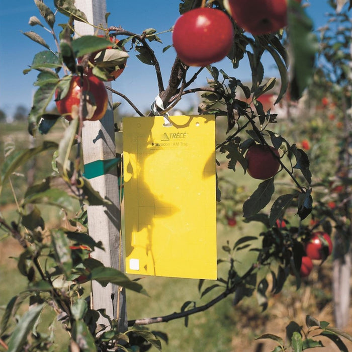 Pherocon® Unbaited AM Yellow Sticky Traps