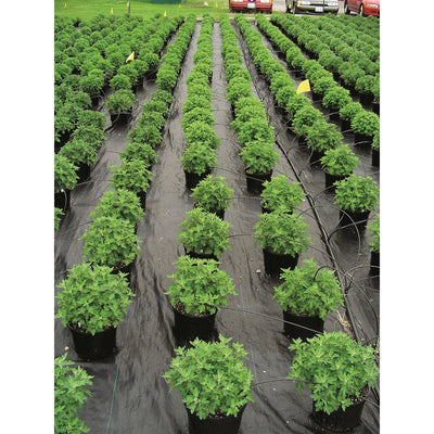 Ultra Web 3000 Ground Cover Roll, 12'W x 300'L