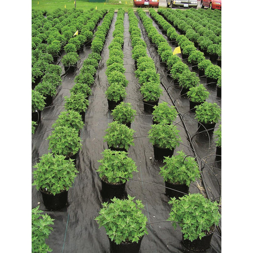 Ultra Web 3000 Ground Cover Roll, 8'W x 600'L