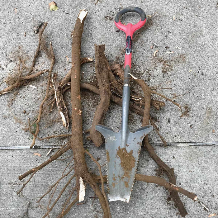 Original Root Slayer Shovel