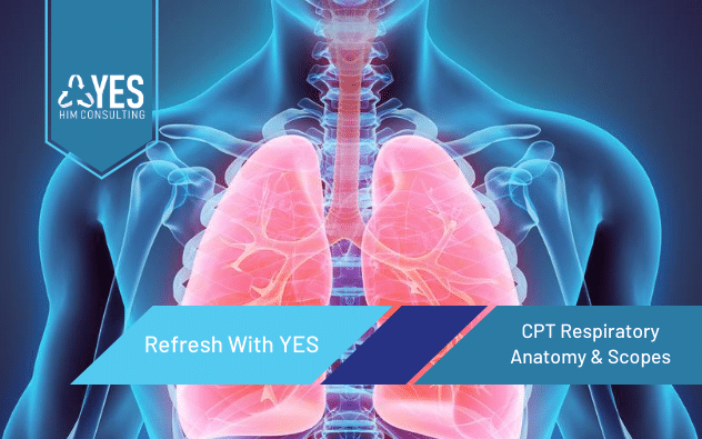 2020 CPT Respiratory System Anatomy & Scopes | Ceus Included