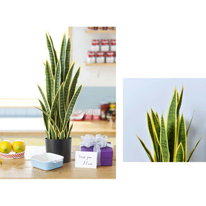 SOGA 2X 50cm Artificial Indoor Yellow Edge Tiger Piran Fake Decoration Tree Flower Pot Plant