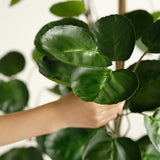 SOGA 180cm Green Artificial Indoor Pocket Money Tree Fake Plant Simulation Decorative