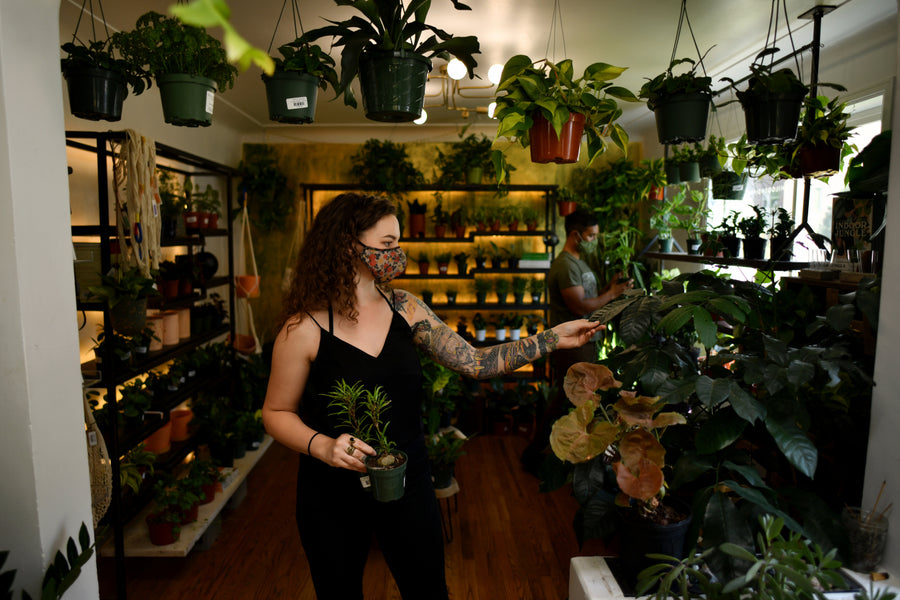 Looking to buy a new house plant? Try one of these 8 indie plant stores in Denver.