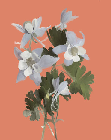 Columbine-Pink Background