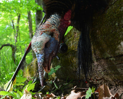 Turkey Hunting | Tips For Hunting High Noon Gobblers