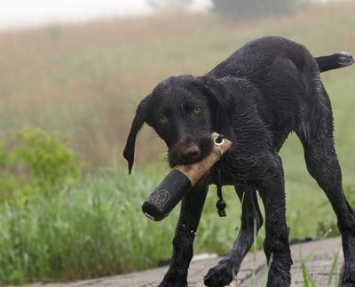 Retriever Tips and Tactics | Offseason Training for Your Duck Dog