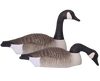 Field Series Canada Goose Shells Touchdown 12-pack