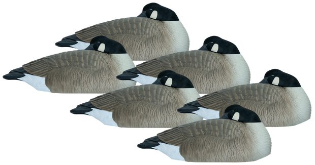 Rugged Series Canada Goose Sleeper Shell - Flocked Head 6pk