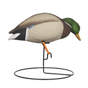 Rugged Full Body Mallard Feeding Drake_Right Side - Painted
