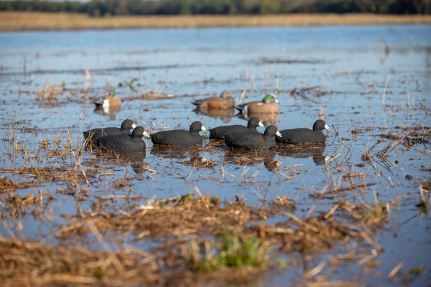 Field Series Coots