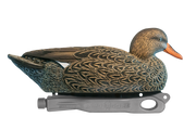 Rugged Gadwall Hen Floater