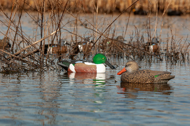 Rugged Series Northern Shoveler