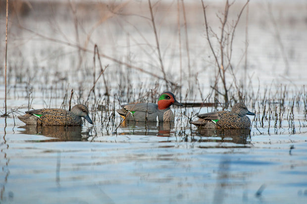 Rugged Series Green-winged Teal