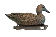 Rugged Series Pintail Hen
