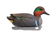 Rugged Green-winged Teal Active Drake Floater