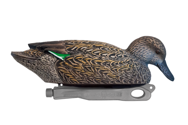 Rugged Green-winged Teal Surface Feeder Hen Floater