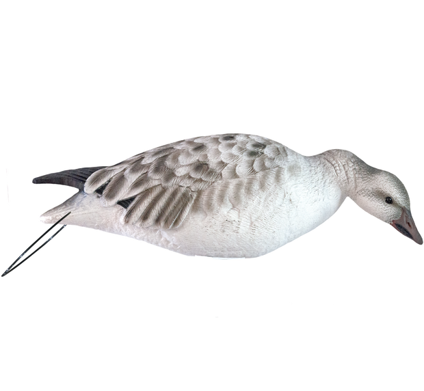 Rugged Series_Juvenile Snow Goose_Right Turn Feeder_RS_Studio
