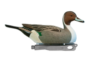 Rugged Series Pintail Drake