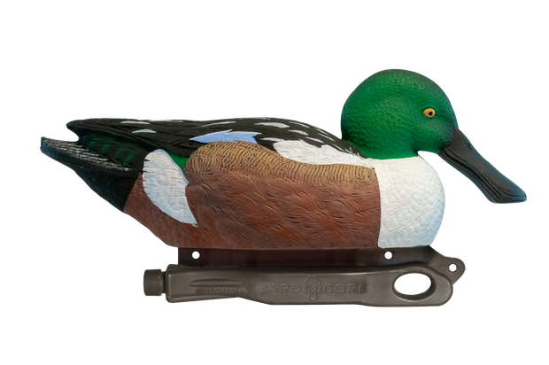 Rugged Northern Shoveler Drake Floater
